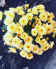 Yellow flowers :)