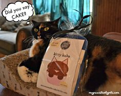 Treat Your Pet With YPCK Pup Kake and Kitty Kake http://www.mypawsitivelypets.com/2016/05/treat-your-pet-with-ypck-pup-kake-and.html