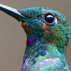Macro Photos of Tiny Hummingbirds in Stunning Detail