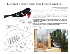 Just about every backyard birdwatcher in Downeast Maine has reported seeing a rose-breasted grosbeak this week – except me! Maybe this will give them a little inspiration to stop by for a vis… Felt Patterns, Bird Patterns, Craft Patterns, Bird Ornaments, Felt Christmas Ornaments, Christmas Wood, Xmas, Fabric Birds, Felt Fabric