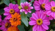 ERNESTO CORTAZAR - AMOR MIO - FLOWERS JUST FOR YOU