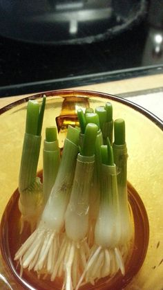 For everone who love green onion,this is one secret the grocery stores don't want you to know. The next time you buy some green onion don't throw away the root just put it in some water and it will regrow. Do this with a few dozen and you will have an endless supply. Just keep cutting and regrowing.