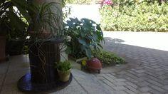 Pequeño carrete + plantas