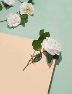 succulents, plants, flora inspiration, flowers
