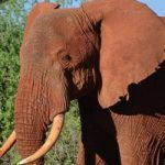 Hong Kong bans ivory trade in 'historic' vote - Yoga Beauty Health Ivory Trade, Elephant Pictures, Science News, International News, Environmental Science, Earth Science, Go Green, Global Warming, Animals