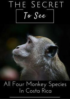 Monkey Species Southern Costa Rica
