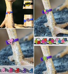 Chicken Coop - Fun way to identify your birds! Charm Leg Bands are enjoyable to see on your feathered friends. Building a chicken coop does not have to be tricky nor does it have to set you back a ton of scratch. Chicken Garden, Backyard Chicken Coops, Chicken Coop Plans, Building A Chicken Coop, Diy Chicken Coop, Backyard Farming, Chickens Backyard, Chicken Feeders, Chicken Tractors