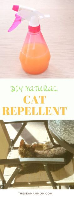 DIY NATURAL CAT REPELLENT - Tired of being frustrated with cats messing around your garden or home? Make a friendly but efficient DIY cat repellent with a few simple, affordable ingredients!