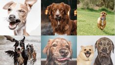 20 of the Derpiest Dogs On Instagram
