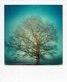 Created by Scott Asano using Impossible PX70 film in the instant lab