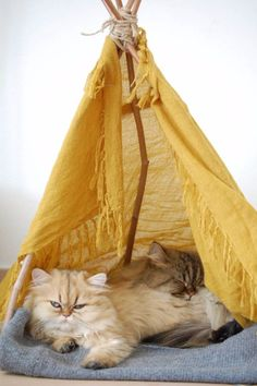 DIY Cat Hacks - DIY Cat Teepee - Tips and Tricks Ideas for Cat Beds and Toys, Homemade Remedies for Fleas and Scratching - Do It Yourself Cat Treat Recips, Food and Gear for Your Pet - Cool Gifts for Cats http://diyjoy.com/diy-cat-hacks