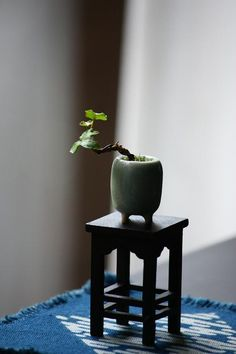 mame bonsai on utilitarian stand, blue matting suggests water
