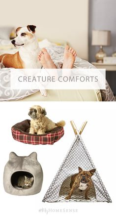 Sweet slumber, our furry friends. Get Fido and Fluffy off your bed and into a chic sleeper that matches your home decor style. From classic plaid to a fun polka dot tent, HomeSense carries pet beds of all shapes and sizes. Find a store near you today!