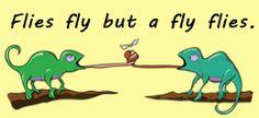 Flies fly