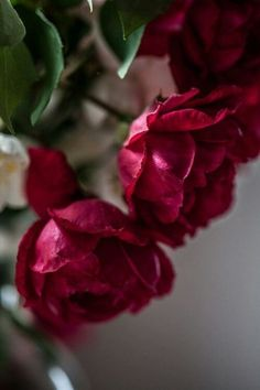 Beautiful Flower Quotes, Beautiful Flowers Photos, Flower Photos, Love Flowers, Beautiful Roses, Beauty Iphone Wallpaper, Flower Iphone Wallpaper, Flower Backgrounds, Happy Birthday Wishes Cards