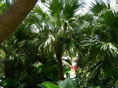 Explore coconut wireless' photos on Flickr. coconut wireless has uploaded 15880 photos to Flickr. Coconut, Atrium, Christmas Ornaments, Holiday Decor, Disney, Entrance, Explore, Photos, Entryway