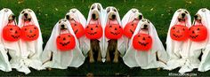 Happy Halloween cover with cute dogs dresses like ghosts. Halloween Cover Photo Facebook, Halloween Cover Photos, Halloween Timeline, Halloween Pictures, Timeline Cover Photos, Facebook Timeline Covers, Cover Pics, Pet Halloween Costumes, Pet Costumes