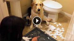 Az egész fürdőszoba tel volt széttépett WC-papírral… a tettesnek farka van, és sírni fogsz a nevetéstől!