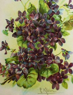 A bunch of wild violets - catherine klein (paints tons of flowers, fruit and birds)