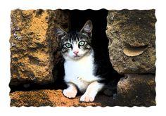 #gatti #cats
