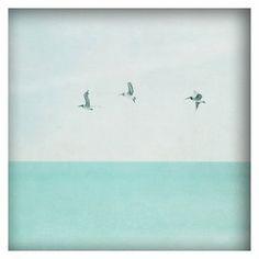 Highland Dunes 'Three Birds' Framed Photographic Print on Canvas