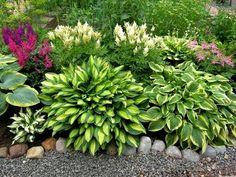Хоста (она же функия) – популярный многолетник, вырастить который может даже новичок. Но для этого необходимо знать некоторые правила ухода за этим растением.