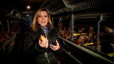Gasztroangyal – Tojás és tészta (2012 - 12.rész) Supa de rosii cu taietei foarte lati! Eat, Youtube, Youtubers, Youtube Movies