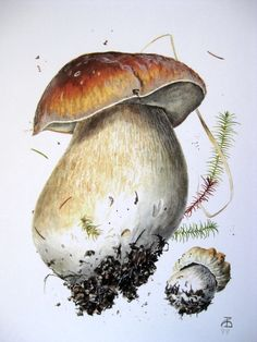 Puravik Botanical Drawings, Botanical Prints, Illustration Botanique, Images Vintage, Mushroom Art, Nature Illustration, Plant Art, Illustrations, Trees To Plant