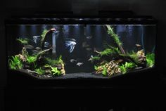 A simple yet effective aquascape.