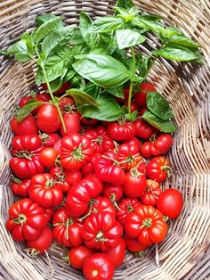 "My ""pomarola"": Tuscan tomato sauce recipe  #Tuscany #Chianti"