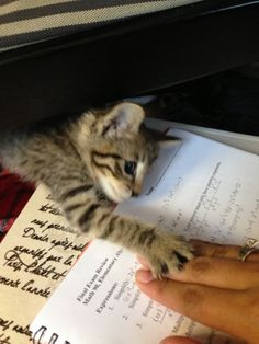 My New Kitty Won't Let Me Study For My Final | Cutest Paw