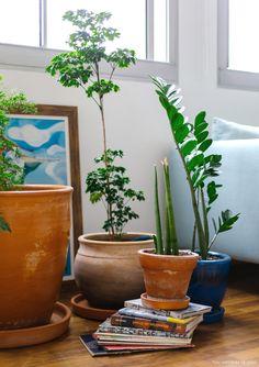 Vasos de barro em formatos diferentes expõem as plantas na sala de estar.