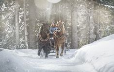 Copyright: Saalbach-Hinterglemm Snow, Horses, Winter, Outdoor, Animals, Animales, Outdoors, Animaux, Outdoor Games