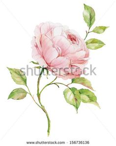 Card With Dogrose Flower. Wild Rose Stock Vector 125880290 : Shutterstock