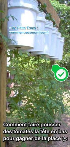 Comment Faire Pousser des Tomates À L'ENVERS Pour Gagner De la Place.