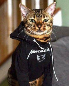 #metallica #mewtallica #cat