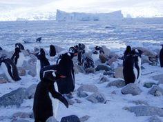 http://www.GraphicDesignNYC.net American Detour: Antartica
