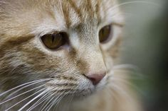 Ginger Kitten Gained a Second Chance at Life