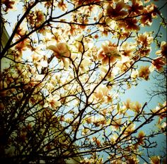 delicate colors, awesome light #lomography