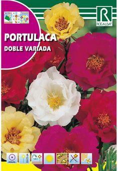 Egynyári virágok : Porcsinrózsa teltvirágú színkeverék 1g Movie Posters, Movies, Art, Art Background, Films, Film Poster, Kunst, Cinema, Movie