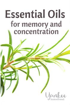 Essential Oils for Memory and Concentration | Yankee Homestead