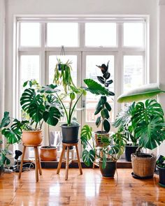 60 Plant Stand Design Ideas for Indoor Houseplants indoor plants; The post 60 Plant Stand Design Ideas for Indoor Houseplants appeared first on Wohnaccessoires. Easy House Plants, House Plants Decor, Indoor Plant Decor, Garden Plants, Plants For Home, Wall Of Plants Indoor, Indoor Plant Stands, Plants In Living Room, Bedroom With Plants