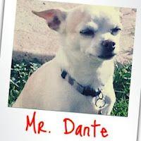 My beloved dogie: Mr. Dante!