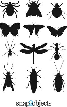 steen tekeningen - 12 Insect Silouettes