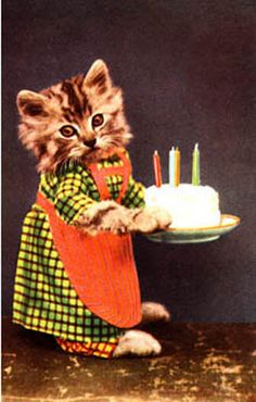 vintage dressed cat postcard cat birthday cake w candle Birthday Wishes For Friend, Birthday Wishes Funny, Happy Birthday Messages, Very Happy Birthday, Cat Birthday, Happy Birthday Images, Happy Birthday Greetings, Cat Cards, Vintage Cat