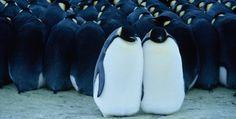 Amazon.co.jp: 皇帝ペンギン プレミアム・エディション [DVD]: リュック・ジャケ, ドキュメンタリー映画: DVD