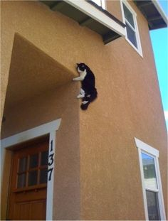 10 Cats with Mad Ninja Skills -- These are hilarious and adorable! :)