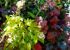 Three types of heuchera with fantastic foliage for the fall. Other great plants to consider...