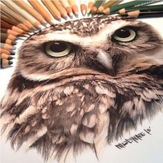 Peerless Drawings of Karla Mialynne// I simply think all of these images are beautiful in the sense they are created in such a simple manner, but they have no much realistic detail. The methods and materials used, make the animals fir, or feather, feel real, because they look it, through the use of shading and detail.