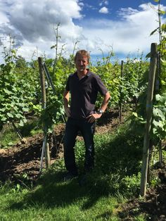 Vini d'Alsazia: si fanno largo i Cremant - Civiltà del bere